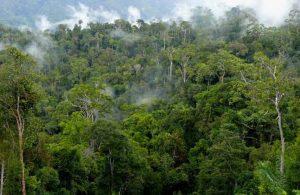Rekrutmen Dinas Kehutanan Provinsi Kalimantan Timur