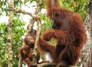 Rekrutmen Yayasan Konservasi Alam Nusantara