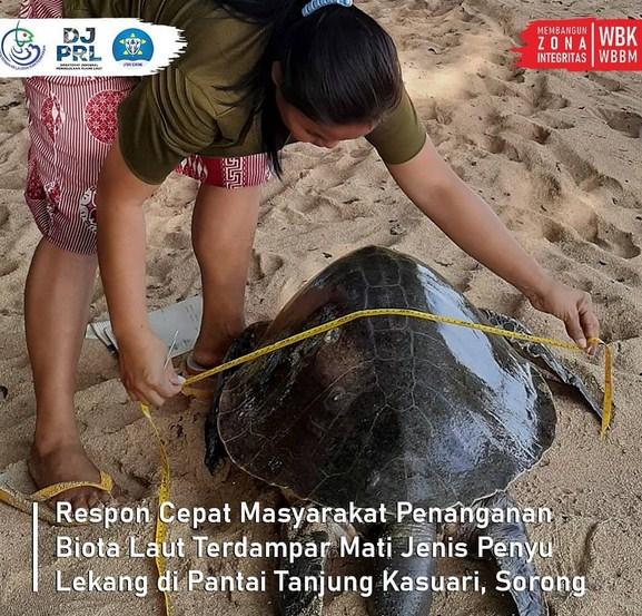 Rekrutmen Loka PSPL Sorong